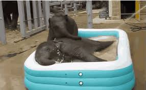 Two Baby Elephants 1 Kiddie Pool