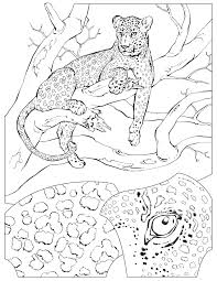 Animals National Geographic Kids Gallery Photos Within Coloring Pages