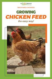 Best 25+ Growing Chicken Feed Ideas On Pinterest | What To Feed ... Why Should You Compost Chicken Manure Is Naturally High In 1105 Best Backyard Project Images On Pinterest Raising Baby Chick Playground Coops Pet Chickens And Worming Backyard Controversial Here Are Tips How To Naturally Treat Coccidiosis Your Chickens Natural Treatment Of Vent Prolapse Ducks 61 To Me Raising Means Addressing Healthkeeping Deworming Homesteads