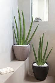 plante dans chambre à coucher plante verte chambre a coucher 4 plantes vertes evtod