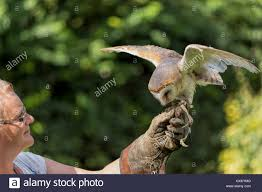 Barn Owl (Tyto Alba ) Or Common Barn Owl Has Just Landed On The ... Common Barn Owl 4 Mounths In Front Of A White Background Stock Royalty Free Images Image 23603549 Known Photo 552016159 Shutterstock Owl Wikipedia 644550523 Mdc Discover Nature Tyto Alba Perched On A Falconers Arm At Daun Audubon Field Guide Mounths Lifeonwhite 10867839 Barnowl 1861 Best Owls Snowy Saw Whets Images Pinterest Photos Dreamstime