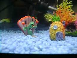 Spongebob Fish Tank Accessories by Spongebob Fish Tank Plankton Power Youtube