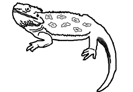 Bearded Dragon Coloring Pages 14