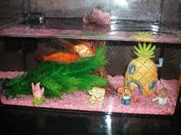 aquadico forum mon 1er aquarium