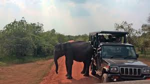 Angry Elephant Uses Her Butt Against A Safari Truck - YouTube Truck African Safari Recycled Dark Green Tin Pop Up Roof Toyota Twilight Metalworks Custom Hunting Rigs Jeeps The Animals On At Selous Game Reserve Tzania Heymoon Blakefarms Apple Orchard Zombie Paintball 2016 Easter Jeep Concept Trucks Test Drives With Photos Suburban Bds Chevrolet Unveils More Concept Cars And Trucks For Sema Motor Trend In Costa Rica Gallery Eastern Surplus 5 Vehicles That Are Guaranteed To Rock Your Kenyan Any Archives Fast Lane 2004 14 Passenger Taxi Van Overland Transportation