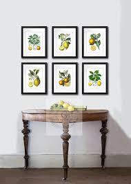 Amazon Kitchen Art Decor Set Of 6 Unframed Lemon Orange Fruit Vintage Botanical Reproduction Prints Posters