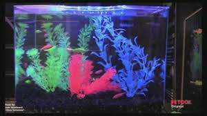 Tetra GloFish AHPResources ListPageResources Pet
