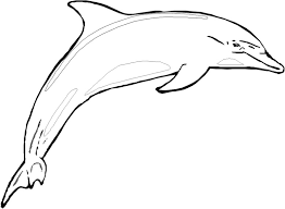 Dolphin Coloring Sheets To Print