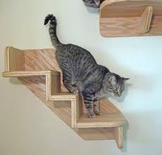 cat stairs best 25 cat stairs ideas on cat climbing shelves cat