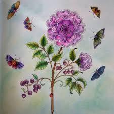 Colouring Adult Coloring Books Garden Pictures Secret Gardens Johanna Basford Gallery Rose Pencil