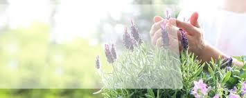 welche pflanzen helfen gegen mücken coop bau hobby