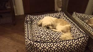jax and bones bed youtube