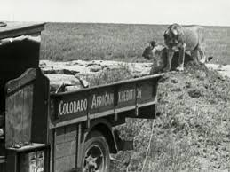File:Africa Speaks! (1930) - Lions & Truck.jpg - Wikimedia Commons Tipp Co A Toy Fire Truck Geray Circa 1930 Bukowskis Ford A Truck Charming Curbside Classic Ford Model Pickup Mack Trucks Years Ford Model Truck V10 Farming Simulator 17 Mod Fs 2017 Aa Dump Boys Time Photo Image Gallery Three Fords To Go Taylor Truckaway Co The Old Motor Diesel History Retrospective Autocar An American Survivor Chevy 1918 1959 Shorpy Historic Picture Archive Brawny Hauler High 1930s Stock Photos Images Alamy Antique Store Fredericksburg Texas Editorial For Sale 2160267 Hemmings News
