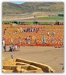 Nearest Pumpkin Patch Shop by Pumpkin Patch U2014 Tanaka Farms