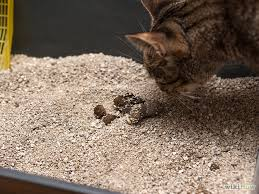 signs of worms in cats how to check cats for worms