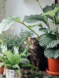 haustierfreundliche pflanzen pflanzenfreude
