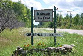 Canaan Fir Good Christmas Tree by Ottman U0027s Fir Farm
