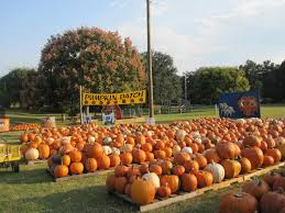 Pumpkin Patch Massachusetts by Pumpkin Patch Druid Hills United Methodist Church