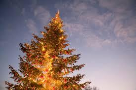 Christmas Tree Disposal Nyc 2015 by Christmas Tree Removal Nyc Christmas Lights Decoration