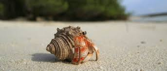 Halloween Hermit Crab Care by Hermit Crab Care Pet Guide And Advice Vetbabble