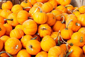 Frederick Maryland Pumpkin Patch by Calvert County Pumpkin Patches Family Traditions Your Calvert