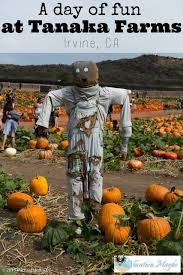 Tanaka Farms Pumpkin Patch Directions by Tanaka Farms Annual Pumpkin Patch Cas Fall And Places