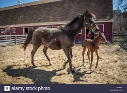Horse With Its Newborn Foal Playing Behind A Barn Stock Photo ... Tammie Dickersons Arstic Journey September 2014 The 7msn Ranch Breakfast From Behind The Barn John Elkington Caroline From 0 To 60 In Well Years Sunrise Behind A Barn On Foggy Morning Stock Photo Image 79809047 Red Trees 88308572 Untitled Document Our Restoration Preserving History Through Barnwood Rebuild Tornado Forming Old Royalty Free Images Sketch For By Hbert Sidney Palmer At Consignorca Shed Olper And Fustein Innervals Vals Valley Towering Sunflower Growing Beside Bigstock