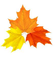 7 Autumn LeavesChristmas HolidaysClip ArtAutumnChristmas