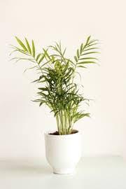 diese pflanzen eignen sich gut fürs schlafzimmer 5 tipps
