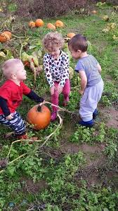Apple Pumpkin Picking Syracuse Ny by Hafner U0027s U Pick Fruit U0026 Vegetable Store Baldwinsville New