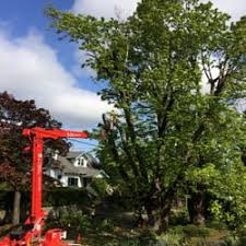 general tree service pest control 6795 sw 111th ave southwest