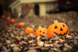 Chatham Kent Pumpkin Patches by Boone Fall Bucket List Her Campus