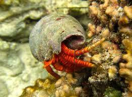 Do Hermit Crabs Shed Their Whole Body by Tijara Beach Hotel U2013 Exclusive Luxury Beach Retreat In Kenya