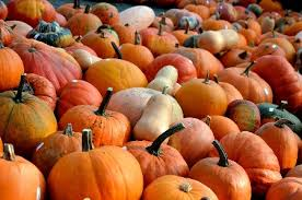 Visalia Mooney Pumpkin Patch by Country Estates Community U2013 Page 15
