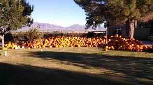 Pumpkin Patch Near El Paso Texas by Jardin De Milagros Trinity First United Methodist