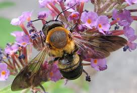 Attracting Insects To Your Garden by How To Attracting Pollinators Flowers That Encourage Bees