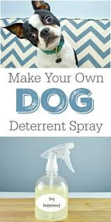 My Dog Stinks And Sheds A Lot by I Have To Try This Being A Foster Dog Mom Is Hard Helpful Tips