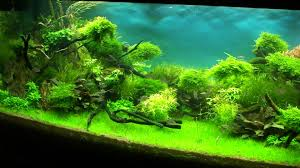 Aquascape World - 28 Images - Standard Rating In The Aquascape ... 66 Gallon Bookshelf Aquarium The Planted Tank Forum Shop Pond Pumps At Lowescom Kate Will Polywood Fniture 28 Images 174 Shd19 Seashell Grillo Rugs Soumac 8019 Rug Outlet And Care Home Theater Decorations D 233 Cor Garden Shed 6 X 3 Keter Plastic Wooden Aquascape World Standard Rating In The Repair Renovation Service Contractors Contractor Aquascapes Owensboro Ky Homedesignpicturewin