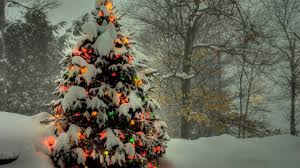 Winterberry Christmas Tree Home Depot by 50 Beautiful Christmas Tree Wallpapers Christmas Tree Wallpaper
