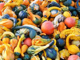 Sarasota Pumpkin Festival Location by Fall Harvest Fest Geraldson Community Farm Bradenton Fl