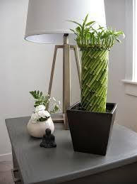 entretien des bambous en pot bambou en pot et lucky bambou entretien et symbolique entretien