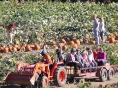 Pumpkin Patch Medford Oregon by Fort Vannoy Corn Maze And Pumpkin Patch