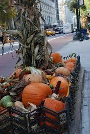 Kula Pumpkin Patch by 20 Best Pumpkin Patch Ideas Images On Pinterest Pumpkin Patches