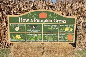 Pumpkin Farms Illinois Goebberts by Prater Place Goebbert U0027s Farm