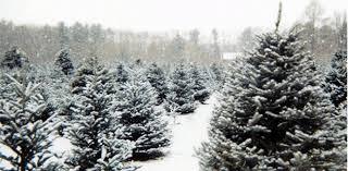Christmas Tree Farm Near Lincoln Nh by 2016 Holiday Activity Bucket List U2013 South Shore Mamas