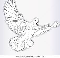 stock vector sketch of pigeon