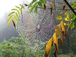 toile d araignée giverny news