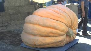 Heaviest Pumpkin Ever by New California Record Set For