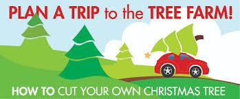 Eustis Christmas Tree Farm by Mary U0027s Blog