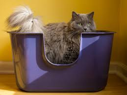 Cat Litter Carpet by 5 Tips For Controlling Cat Litter Tracking And Scattering Catster